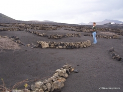 Lanzarote. Bodega Antonio Suarez. Grape plantation