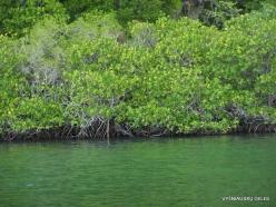 1 Komodo National Park. Rinca island. Mangroves