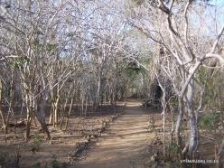 Komodo National Park. Komodo island (7)
