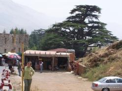 1. Arz ar-Rabb (Cedars of God) reserve (1)