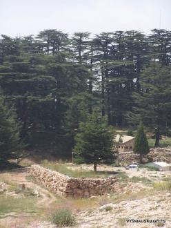 2. Arz ar-Rabb (Cedars of God) reserve (15)