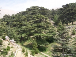 2. Arz ar-Rabb (Cedars of God) reserve (21)