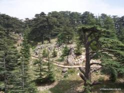 2. Arz ar-Rabb (Cedars of God) reserve (24)