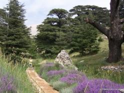 2. Arz ar-Rabb (Cedars of God) reserve (32)