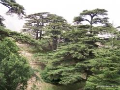 2. Arz ar-Rabb (Cedars of God) reserve (39)