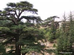 2. Arz ar-Rabb (Cedars of God) reserve (43)