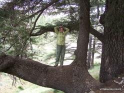 2. Arz ar-Rabb (Cedars of God) reserve (44)