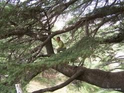 2. Arz ar-Rabb (Cedars of God) reserve (45)