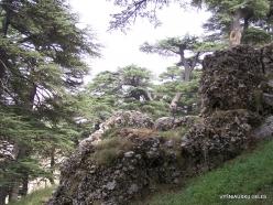 2. Arz ar-Rabb (Cedars of God) reserve (46)
