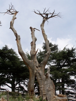 2. Arz ar-Rabb (Cedars of God) reserve (52)