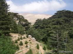 2. Arz ar-Rabb (Cedars of God) reserve (58)