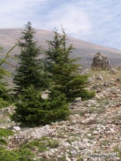 Arz ar-Rabb (Cedars of God) reserve (17)
