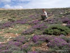 Lebanon Mountains. Machraa el Qalaât. Alpine plants (2)