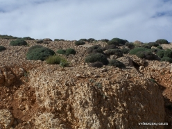 Lebanon Mountains. Machraa el Qalaât. Alpine plants (3)