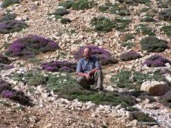 Lebanon Mountains. Machraa el Qalaât. Alpine plants (6)