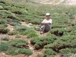 Faitroun. Mountain plants (10)