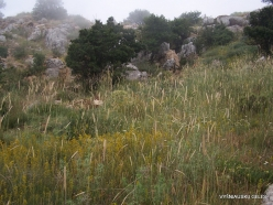 Faitroun. Mountain plants (14)