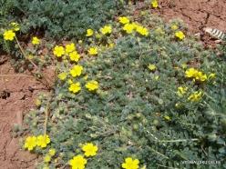 Faitroun. Mountain plants (7)