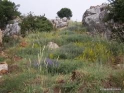 Faitroun. Mountain plants