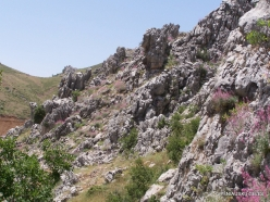 Laqlouq (3)