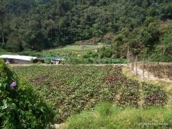 Kelantan. Lojing Highlands. Village of Orang Asli (Temiar) peoples