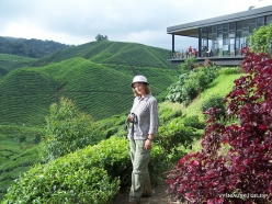 1 Pahang. Cameron Highlands. Tea plantation (7)