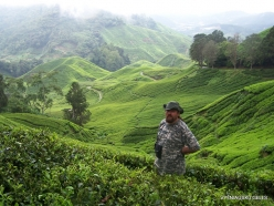 1 Pahang. Cameron Highlands. Tea plantation (8)
