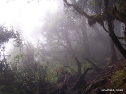 2 Pahang. Near Brinchang. Mossy Forest (9)