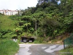 Pahang. Tanah Rata (5)