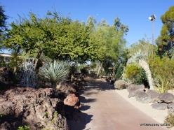 1 Las Vegas. Ethel M Cactus Garden (1)