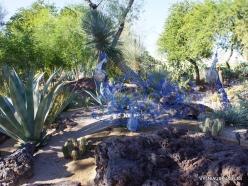 1 Las Vegas. Ethel M Cactus Garden (17)