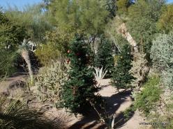 1 Las Vegas. Ethel M Cactus Garden (18)