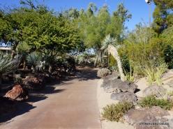 1 Las Vegas. Ethel M Cactus Garden (19)