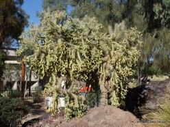 1 Las Vegas. Ethel M Cactus Garden (24)