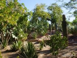 1 Las Vegas. Ethel M Cactus Garden (4)