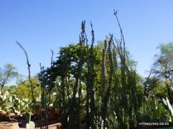 1 Las Vegas. Ethel M Cactus Garden (6)