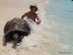Seychelles. Curieuse. Aldabra giant tortoise (Aldabrachelys gigantea) (1-1)