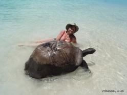Seychelles. Curieuse. Aldabra giant tortoise (Aldabrachelys gigantea) (1)