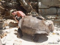 Seychelles. Curieuse. Aldabra giant tortoise (Aldabrachelys gigantea) (5)