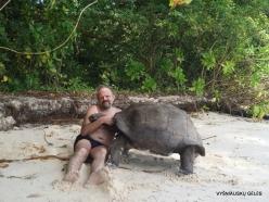 Seychelles. Curieuse. Aldabra giant tortoise (Aldabrachelys gigantea)