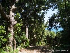 Seychelles. Praslin. Anse La Blague (5)