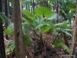 Seychelles. Praslin. Fond Ferdinand (14)