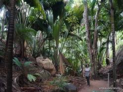 Seychelles. Praslin. Fond Ferdinand (2)