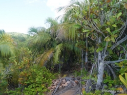 Seychelles. Praslin. Fond Ferdinand (3)
