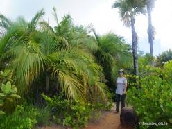 Seychelles. Praslin. Fond Ferdinand (5)
