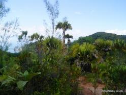 Seychelles. Praslin. Fond Ferdinand (6)
