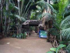 Seychelles. Praslin. Valle de Mai (11)