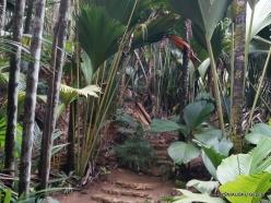 Seychelles. Praslin. Valle de Mai (3)