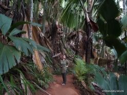 Seychelles. Praslin. Valle de Mai (5)