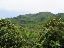 Seychelles. Praslin. Valle de Mai (6)